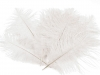 Pštrosí peří délka 13-20 cm (2 ks)