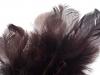 Bažantí peří délka 4-12 cm (1 sáček)
