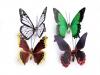 Dekorace motýl 3D s klipsem (12 ks)