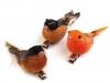 Dekorace ptáček s klipsem (3 ks)